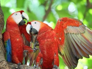 Costa Rica bird watching is a popular past time