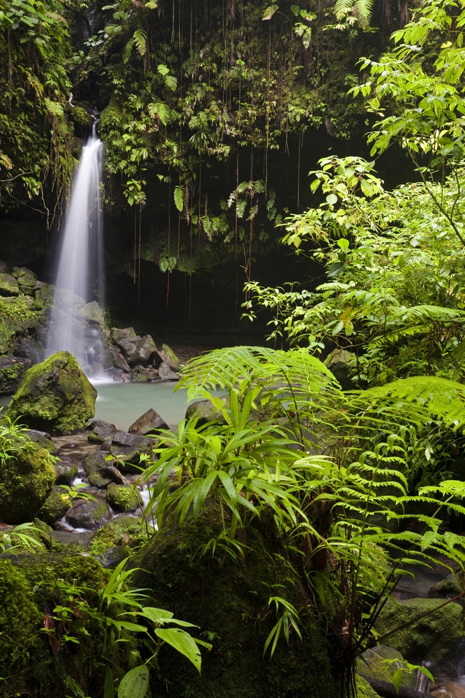 the difference between a jungle and a rain forest Best answer: i would like to think of a rainforest as a complete flora and fauna ecosystem a jungle, to me, would be simply plants with little diversity of species.