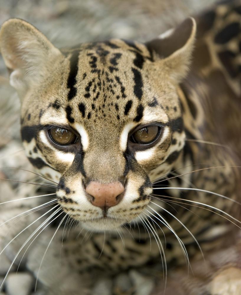 Meet Some of Costa Rica's Exotic Wildlife