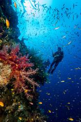 tamarindo-diving