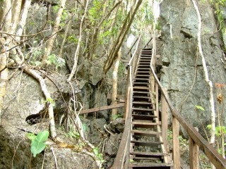 monkey-trail