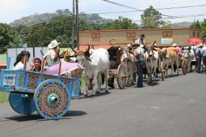 Costa Rica ox cart parade