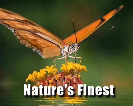 nature-principal-new