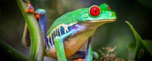 Costa Rica bio-diversity