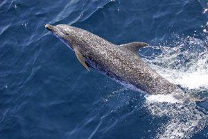 Costa Rica dolphin