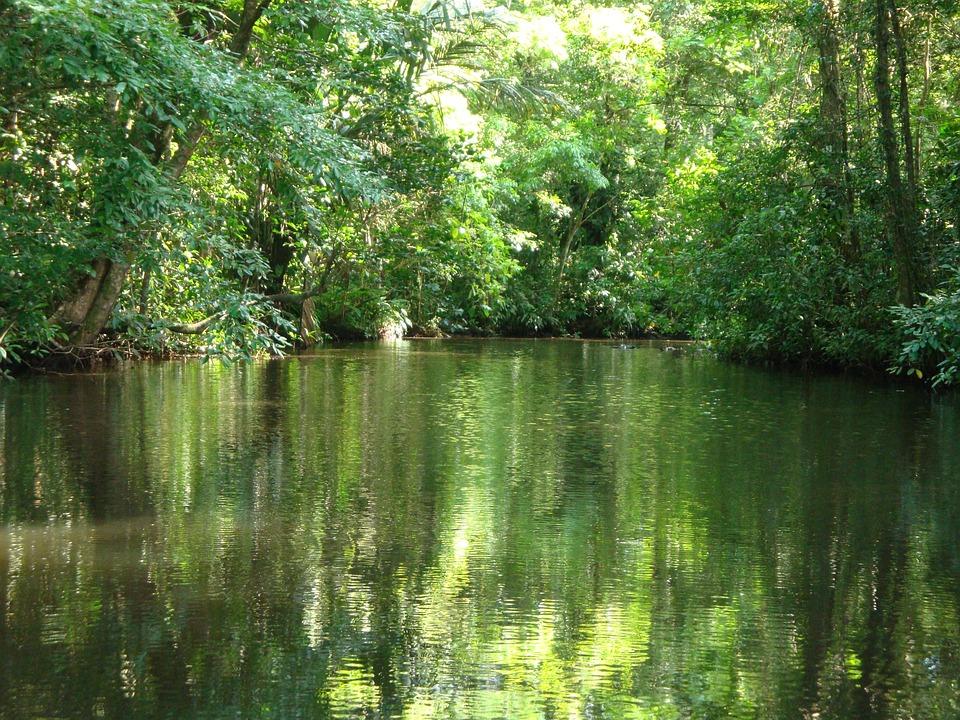 Costa Rica Jungles