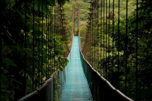 Cloud forest experience in Costa Rica
