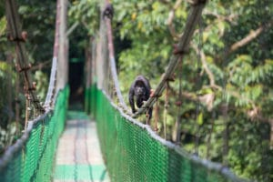 monkey on bridge