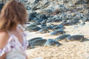 Turtle nesting Playa Samara