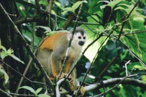 Wildlife in Juan Castro Blanco National Park