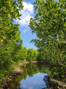 Costa Rica Rios mangrove